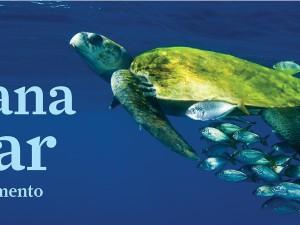 Encerramento da 6ª Semana do Mar conta com atividades na Praça da Baleia, no Aquário de Ubatuba e Projeto Tamar